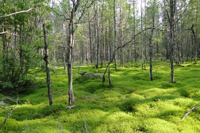 леса костромской области фото