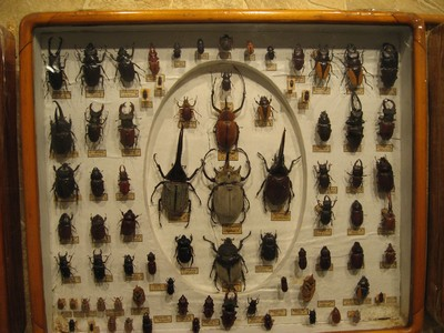 Коллекция насекомых И. М. Рубинского